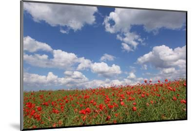 Schleswig-Holstein, Field with Poppies-Catharina Lux-Mounted Photographic Print