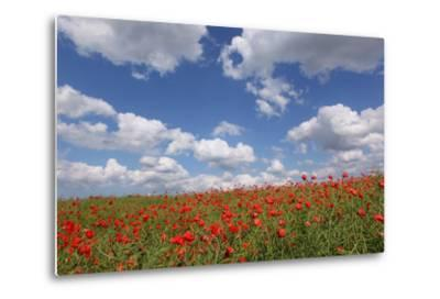 Schleswig-Holstein, Field with Poppies-Catharina Lux-Metal Print
