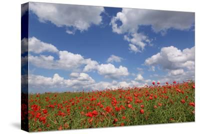 Schleswig-Holstein, Field with Poppies-Catharina Lux-Stretched Canvas Print