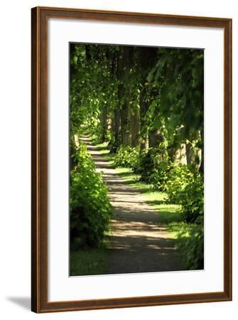 Schleswig-Holstein, Sieseby, Path Through Old Cemetery-Catharina Lux-Framed Photographic Print