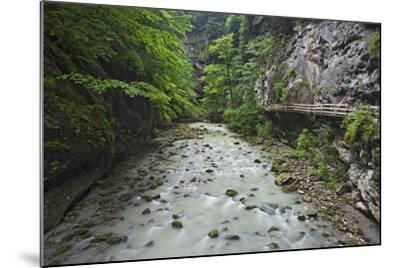 Austria, Vorarlberg, Dornbirn (Village), Rappenlochschlucht (Ravine) (Gulch)-Rainer Mirau-Mounted Photographic Print