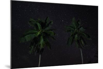 The Seychelles, La Digue, Palms, Starry Sky-Catharina Lux-Mounted Photographic Print