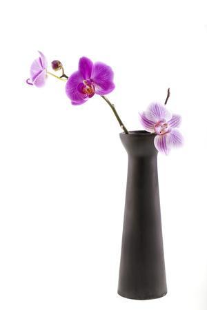Orchid with Black Vase-Andrea Haase-Framed Photographic Print