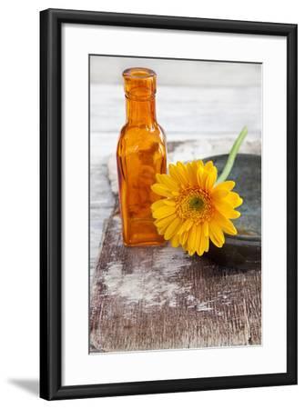 Gerbera, Flower, Orange, Glass Bottle-Andrea Haase-Framed Photographic Print