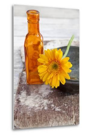 Gerbera, Flower, Orange, Glass Bottle-Andrea Haase-Metal Print