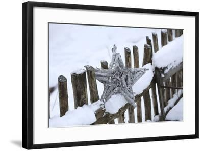 Poinsettia and Old Wooden Fence-Andrea Haase-Framed Photographic Print