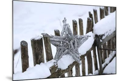 Poinsettia and Old Wooden Fence-Andrea Haase-Mounted Photographic Print