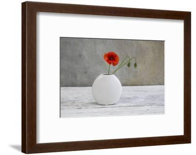 Poppy Blossom and Buds in White Vase-Andrea Haase-Framed Photographic Print