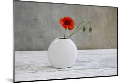 Poppy Blossom and Buds in White Vase-Andrea Haase-Mounted Photographic Print