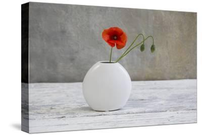 Poppy Blossom and Buds in White Vase-Andrea Haase-Stretched Canvas Print