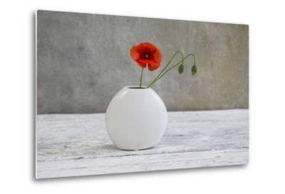 Poppy Blossom and Buds in White Vase-Andrea Haase-Metal Print