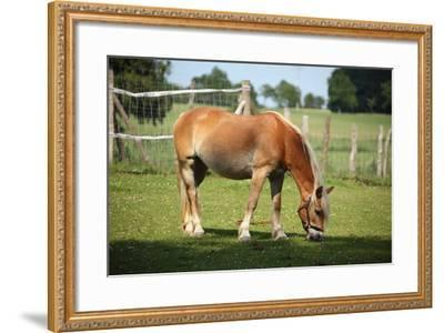 Farm, Pasture, Horse-Catharina Lux-Framed Photographic Print
