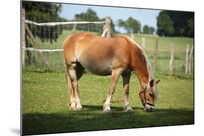 Farm, Pasture, Horse-Catharina Lux-Mounted Photographic Print