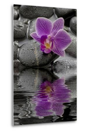 Orchid Blossom on Black Stones, Water, Reflection-Uwe Merkel-Metal Print