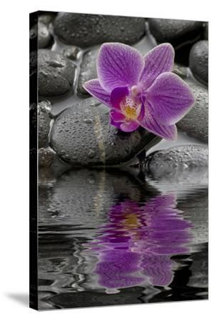 Orchid Blossom on Black Stones, Water, Reflection-Uwe Merkel-Stretched Canvas Print
