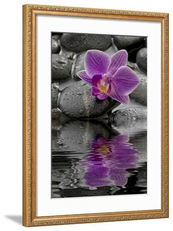 Orchid Blossom on Black Stones, Water, Reflection-Uwe Merkel-Framed Photographic Print