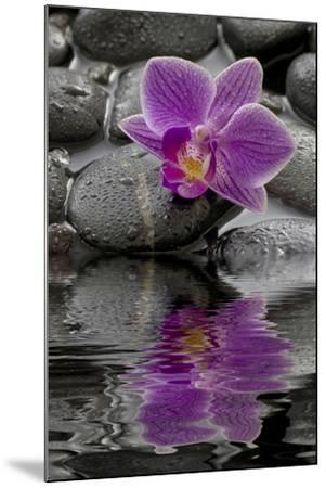 Orchid Blossom on Black Stones, Water, Reflection-Uwe Merkel-Mounted Photographic Print