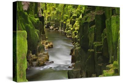 Whaiti-Nui-A-Toi Canyon, Whirinaki Forest Park, Bay of Plenty, North Island, New Zealand-Rainer Mirau-Stretched Canvas Print