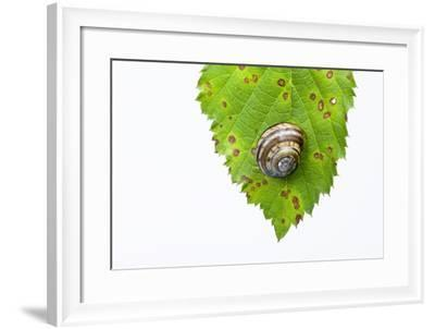 Snail, Leaf-Frank Lukasseck-Framed Photographic Print