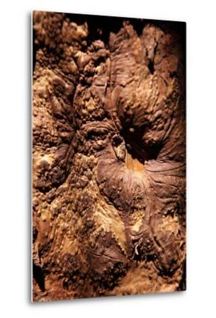 Cinnamon Tree, Cinnamomum Sp., Bark, Cinnamon Bark-Catharina Lux-Metal Print