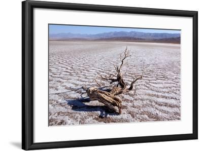 USA, Death Valley National Park, Salt Creek-Catharina Lux-Framed Photographic Print