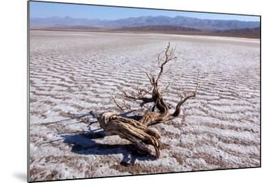 USA, Death Valley National Park, Salt Creek-Catharina Lux-Mounted Photographic Print