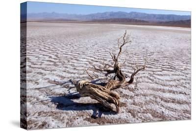 USA, Death Valley National Park, Salt Creek-Catharina Lux-Stretched Canvas Print