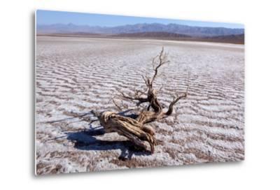 USA, Death Valley National Park, Salt Creek-Catharina Lux-Metal Print