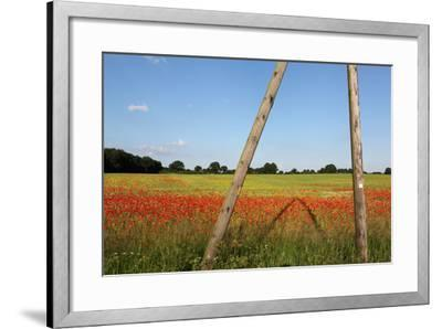 Schleswig-Holstein, Poppy and Rape-Catharina Lux-Framed Photographic Print