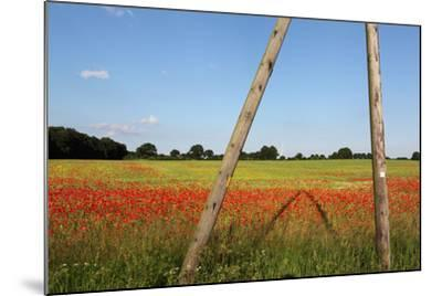 Schleswig-Holstein, Poppy and Rape-Catharina Lux-Mounted Photographic Print