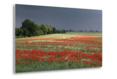 Mecklenburg-Western Pomerania, Landscape, Poppy Field, Stormy Atmosphere-Catharina Lux-Metal Print