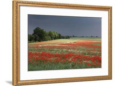 Mecklenburg-Western Pomerania, Landscape, Poppy Field, Stormy Atmosphere-Catharina Lux-Framed Photographic Print