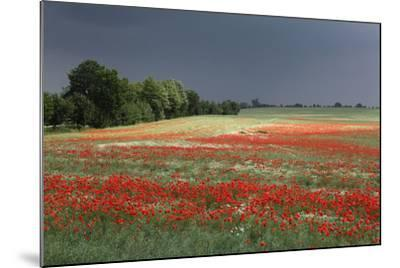 Mecklenburg-Western Pomerania, Landscape, Poppy Field, Stormy Atmosphere-Catharina Lux-Mounted Photographic Print