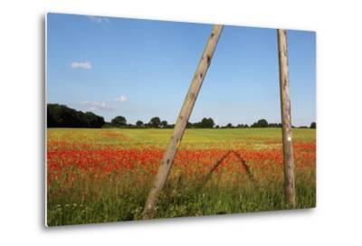 Schleswig-Holstein, Poppy and Rape-Catharina Lux-Metal Print