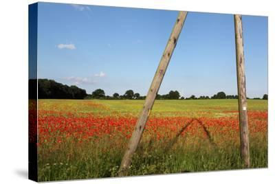 Schleswig-Holstein, Poppy and Rape-Catharina Lux-Stretched Canvas Print