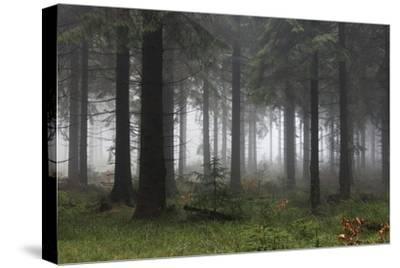 Germany, Thuringia, Rennsteig, Forest, Trees, Fog-Harald Schšn-Stretched Canvas Print