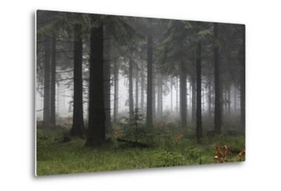 Germany, Thuringia, Rennsteig, Forest, Trees, Fog-Harald Schšn-Metal Print