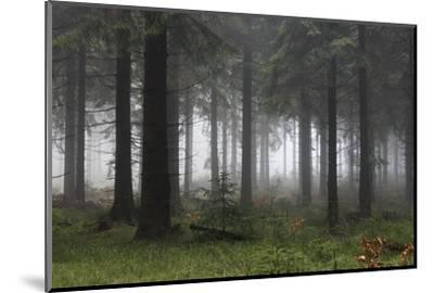 Germany, Thuringia, Rennsteig, Forest, Trees, Fog-Harald Schšn-Mounted Photographic Print