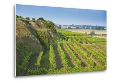 Austria, Lower Austria, Krems (River), Kremstal (Valley), Vineyards-Rainer Mirau-Metal Print