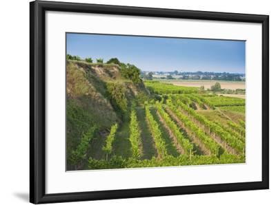 Austria, Lower Austria, Krems (River), Kremstal (Valley), Vineyards-Rainer Mirau-Framed Photographic Print
