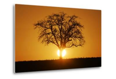 Meadow, Tree, Bald, Silhouette, Sunset Landscape-Ronald Wittek-Metal Print
