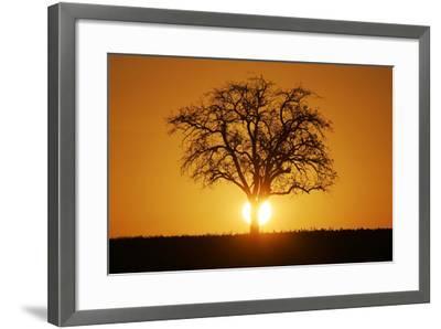 Meadow, Tree, Bald, Silhouette, Sunset Landscape-Ronald Wittek-Framed Photographic Print