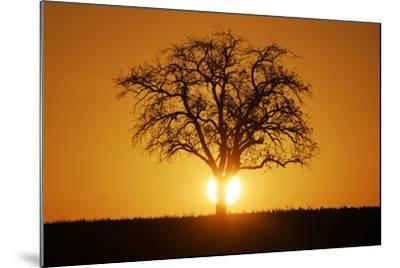 Meadow, Tree, Bald, Silhouette, Sunset Landscape-Ronald Wittek-Mounted Photographic Print