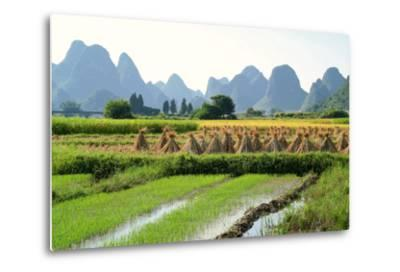 China, Rice Fields at the Yulong River, Landscape, Karst Mountains-Catharina Lux-Metal Print