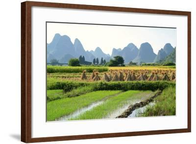 China, Rice Fields at the Yulong River, Landscape, Karst Mountains-Catharina Lux-Framed Photographic Print