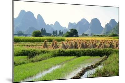 China, Rice Fields at the Yulong River, Landscape, Karst Mountains-Catharina Lux-Mounted Photographic Print