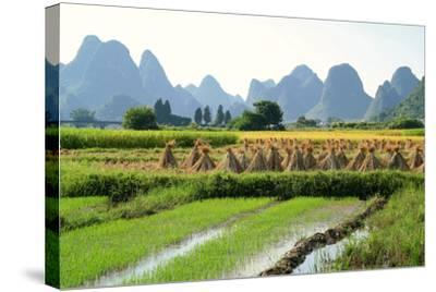 China, Rice Fields at the Yulong River, Landscape, Karst Mountains-Catharina Lux-Stretched Canvas Print