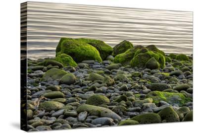Iceland, Gardskagi, Coast, Moss-Covered Stones-Catharina Lux-Stretched Canvas Print