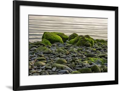 Iceland, Gardskagi, Coast, Moss-Covered Stones-Catharina Lux-Framed Photographic Print