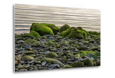 Iceland, Gardskagi, Coast, Moss-Covered Stones-Catharina Lux-Metal Print